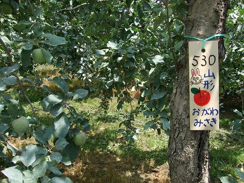 7月の木の契約会の時は テニスボールぐらいの大きさでした